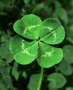 Clover real