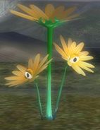 Creeping Chrysanthemum hiding