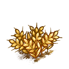 File:Farm-wheat-ripe.png