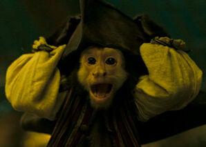 Jack the monkey-thumb-550x392-48568