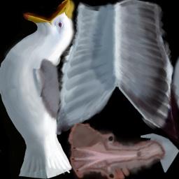 File:Seagull2.jpg