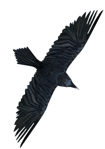 File:Raven2.png