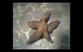 Thumbnail for version as of 22:16, September 21, 2011