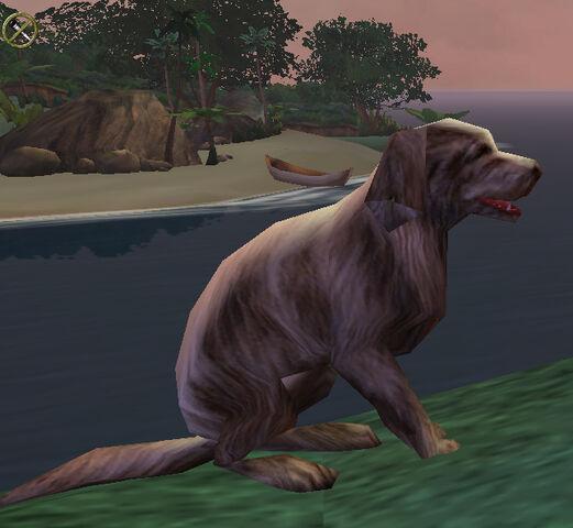 File:Dog at sunset.jpg