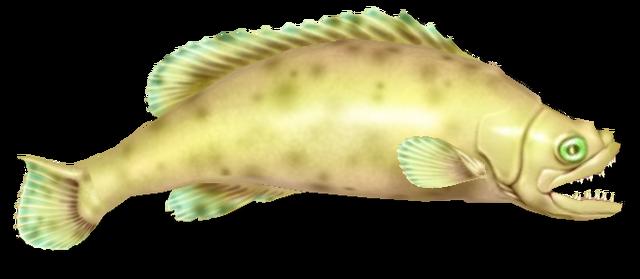 File:Fish 16.png