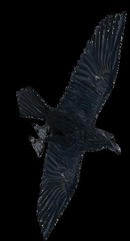 File:Raven3.png
