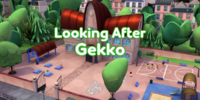 Looking After Gekko/Gallery