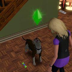 Pies wymęczony trenigiem