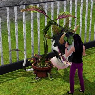 Chwalenie Krowo-kwiatu<sup class=