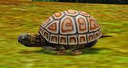 Żółw 1