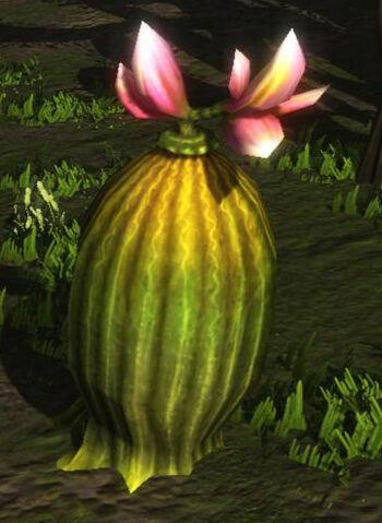 File:Euphorbia.jpg