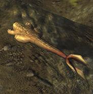 Lungfish1