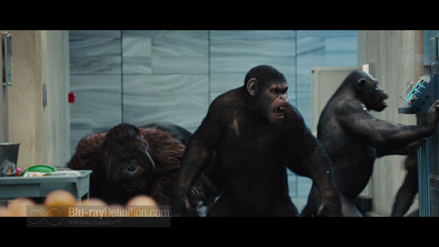File:Rise of the Planet of the Apes19.jpg