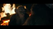 WPOTA Bad Ape 2