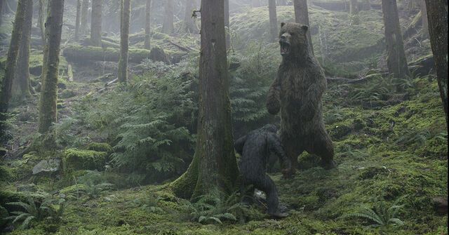 File:DOTPOTAs-BlueEyes vs Bear.jpg