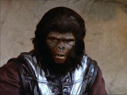 Lieutenant gorilla