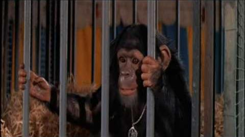 Mama! (Escape from the Planet of the Apes, 1971)