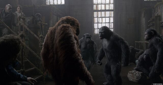 File:Koba asking Muarice where's Caesar.jpeg