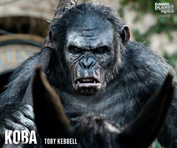 File:Koba.jpg