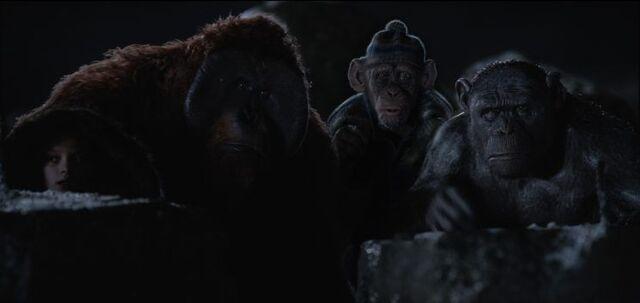 File:WPOTA Nova, Maurice, Bad Ape & Rocket.jpg