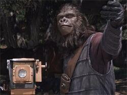 Gorilla Photographer