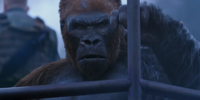 Colonel McCullough/Relationships