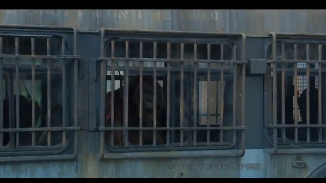 File:Apes in Cages.jpg