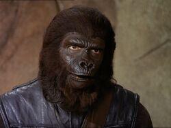 Police gorilla