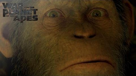 War for the Planet of the Apes Witness The End 20th Century FOX