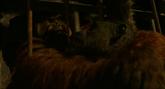 Maurice strangles one of Koba's minions