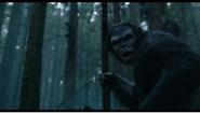 Apes hunt