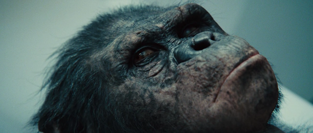 File:Rise Of The Planet Of The Apes 2011 720p BRRip XviD AC3-ViSiON-www intercambiosvirtuales org-2-153851.png