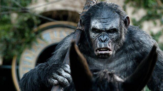 File:Koba-Dawn-of-the-Planet-of-the-Apes-WideWallpapersHD-2014-07-22-3.jpg