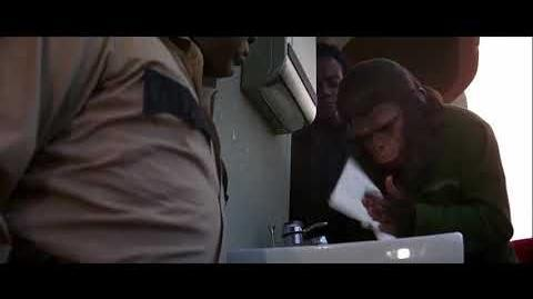 Conquest of the Planet of the Apes (1972) Ape training part 2