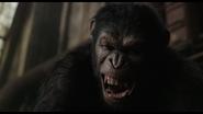Caesar snarls as he strangles Koba