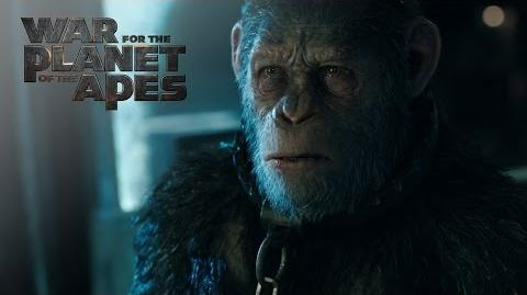 """War for the Planet of the Apes """"Witness The End"""" TV Commercial 20th Century Fox"""
