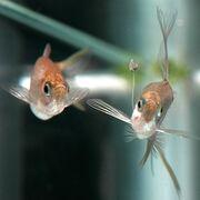 Fishy act