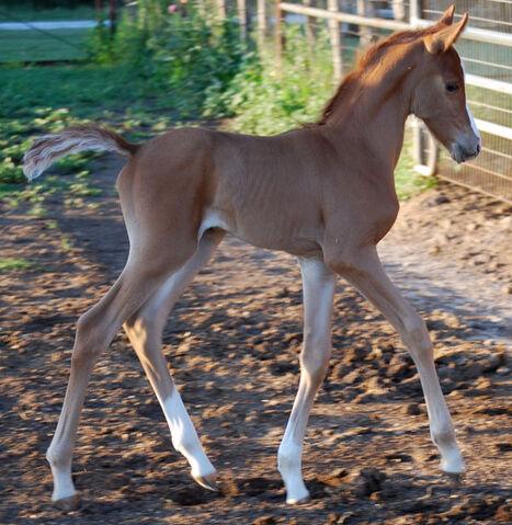 File:ANNOYING HORSE.jpg