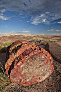 Petrified forest log 1 md