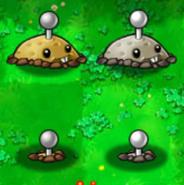 Potato mines