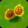 Twin SunflowerA