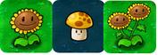 The Three Sun Producing Plants