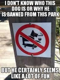 File:Thisdog.jpg