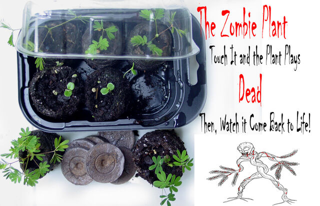 File:ZGK1 Zombie Grow Kit with seed pack 300 resolution with graphic image Vendors.jpg