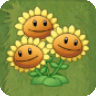 File:Triplet SunflowerAS.png