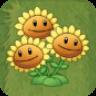 Triplet SunflowerAS.png