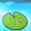 Lily Pad1
