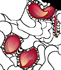 File:Petal-Morphosis HD.png