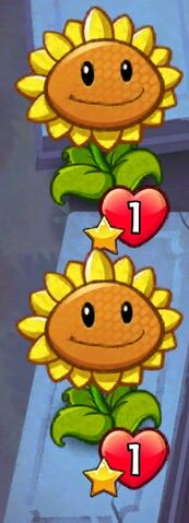 File:Double Sunflowers.jpeg