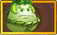 Whitemelon Legendary Seed Packet